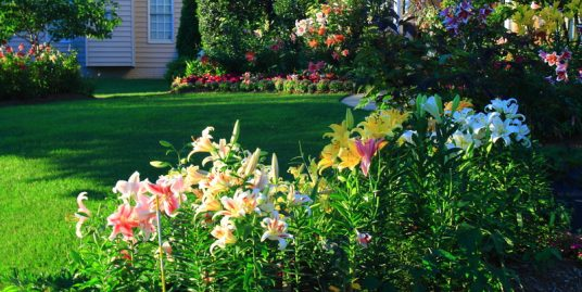 How to Transform Your Backyard From an Eye Sore to a Perfect Landscape